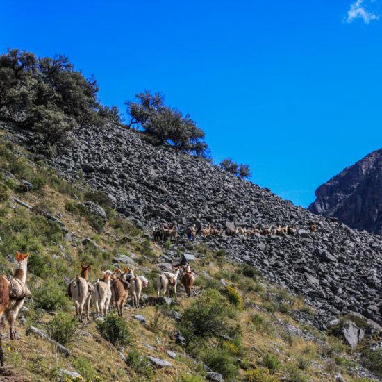 Entrée dans la réserve de Yauyos