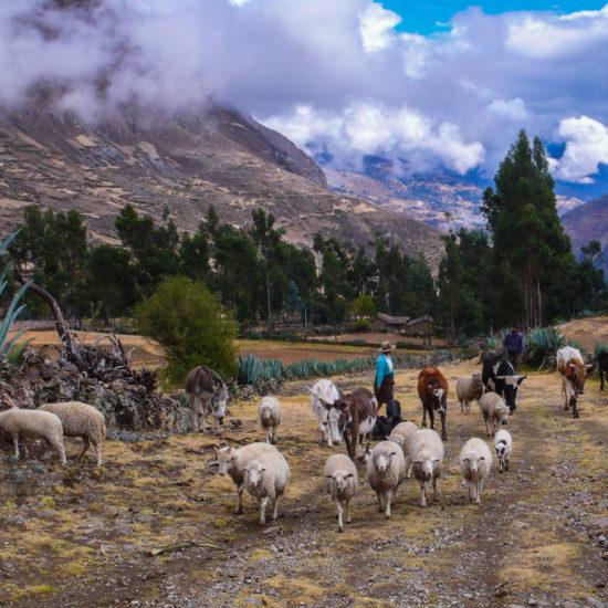 Chemin rural sur le tracé pré-hispanique ancien
